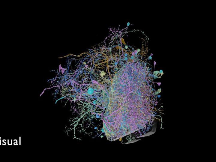 جوجل تنشر أكثر عمليات المسح الدماغي تفصيلًا